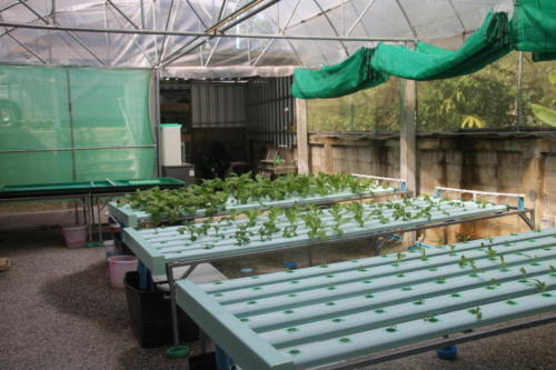 S2S hydroponic garden tables and storage area.