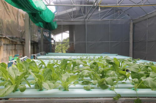 S2S hydroponic garden growing tables.